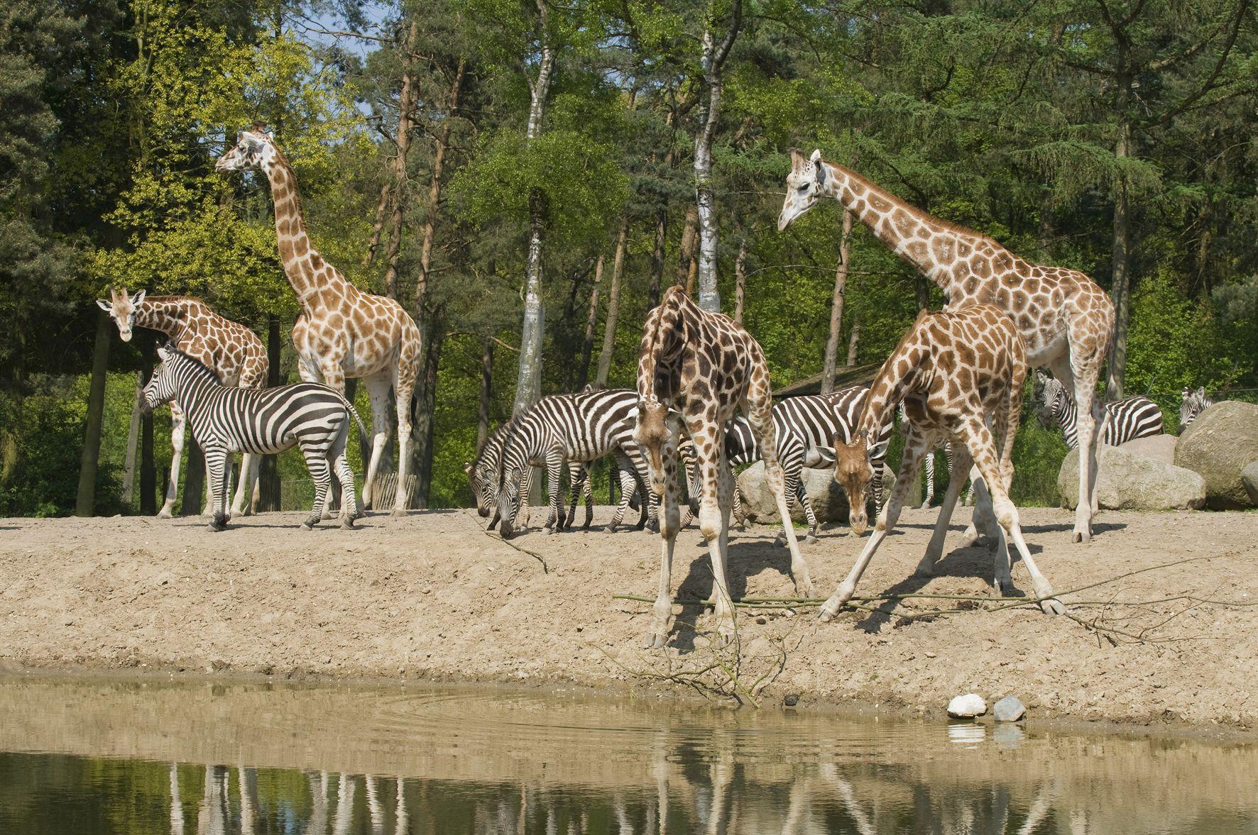 Afrika Festival im Burgers´ Zoo