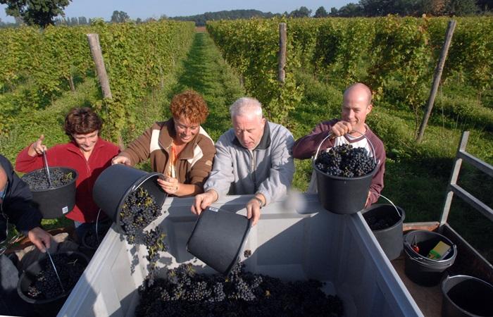 Direkt hinter der Grenze: Groesbeek feiert sein Weinfest