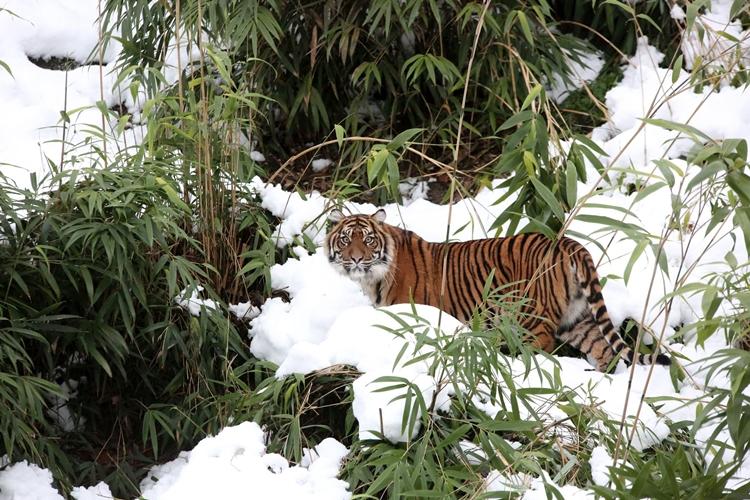Burgers' Zoo: Tropische Tiere im niederländischen Winter