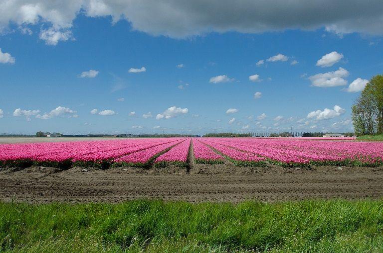 Nederlandse landbouwexport bereikt recordniveau