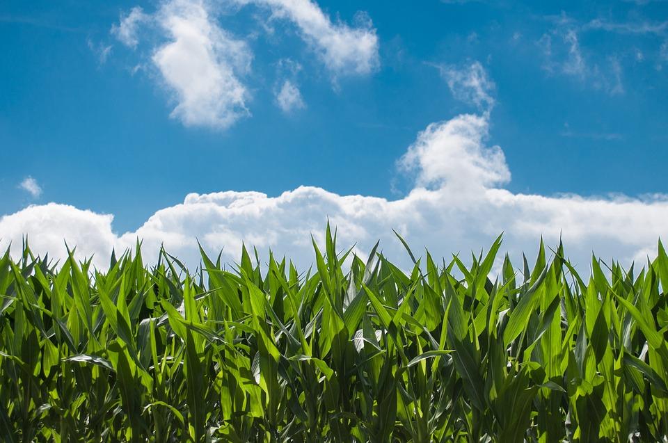Gezocht: innovatieve grensoverschrijdende projectideeën voor levensmiddelenindustrie