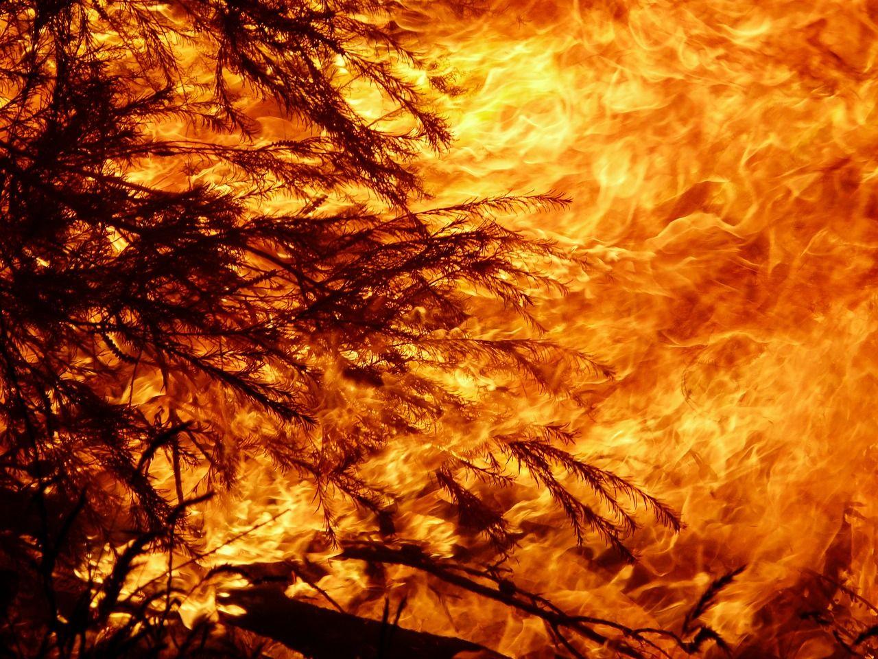Limburgse en Duitse brandweerkorpsen trekken samen op tegen bos- en natuurbranden