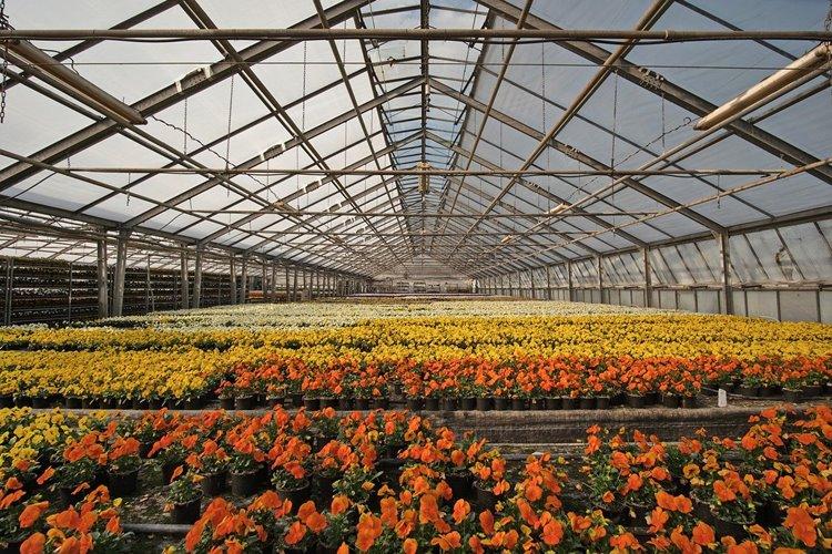 Niederländisches Notfallpaket: Gartenbau NRW befürchtet Nachteile
