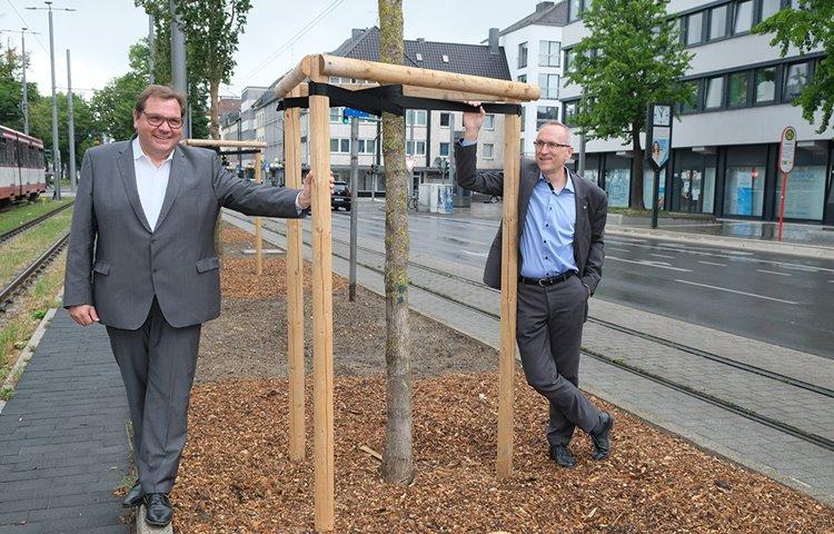 INTERREG-Forschungsprojekt für gesündere Straßenbäume