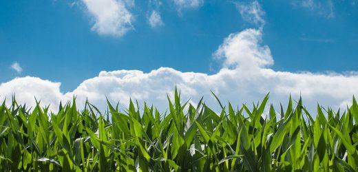 Waarde van landbouwexport naar Duitsland gestegen