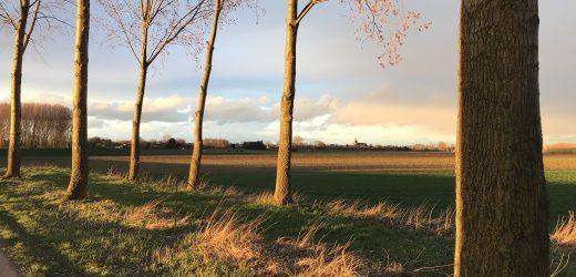 Filmpjes van Duitse boer in grensoverschrijdend dialect gaan viral