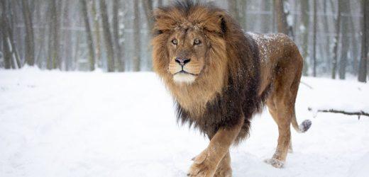 Burgers' Zoo: So kommen Löwe, Zebra und Pinguin durch die Wintertage