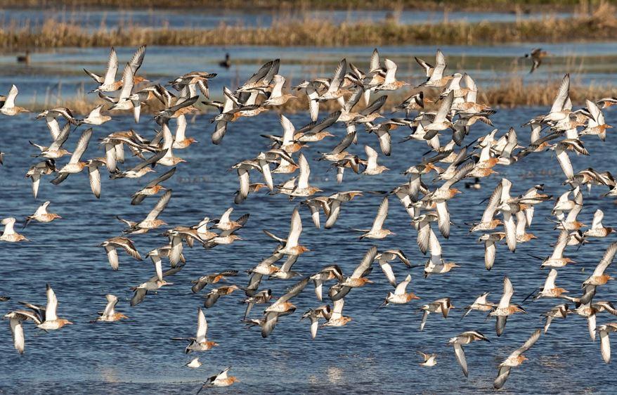 Niederlande und Niedersachsen packen Wiesenvogelschutz gemeinsam an