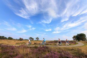 Lädt auch im Herbst zu einer Tour durch verschiedene LAndschaftstypen ein: der Nationalpark Hoge VeluweFoto: Nationalpark Hoge Veluwe